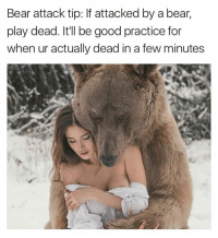 Funny, The More You Know, and Bear: Bear attack tip: If attacked by a bear,  play dead. It'll be good practice for  when ur actually dead in a few minutes The more you know
