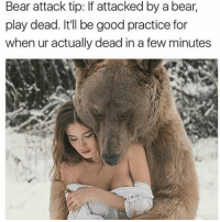 Bear, Bears, and Relatable: Bear attack tip: If attacked by a bear,  play dead. It'll be good practice for  when ur actually dead in a few minutes -L