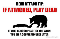 "Memes, Bear, and Good: BEAR ATTACK TIP:  IF ATTACKED, PLAY DEAD  IT WILL BE GOOD PRACTICE FOR WHEN  YOU DIE A COUPLE MINUTES LATER  BEARMAGEODON,COM <p>Practice makes Perfect via /r/memes <a href=""http://ift.tt/2BdeurT"">http://ift.tt/2BdeurT</a></p>"