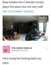 Being Alone, Bitch, and Fucking: Bear breaks into Colorado house,  plays the piano but not very well  adn.com/nation-world/2...  canary  凡a  THE HOOD ORACLE  @MADBLACKTHOT  He's trying his fucking best you  bitch leave him alone