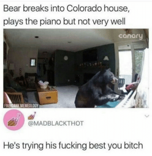 Bitch, Dank, and Fucking: Bear breaks into Colorado house,  plays the piano but not very wel  canaru  FB@DANK MEMEOLOGY  @MADBLACKTHOT  He's trying his fucking best you bitch Poor Bear