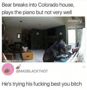 Bitch, Dank, and Fucking: Bear breaks into Colorado house,  plays the piano but not very well  canary  FB@DANK MEMEOLOGY  @MADBLACKTHOT  He's trying his fucking best you bitch Always try your best via /r/wholesomememes https://ift.tt/2GXOR0O