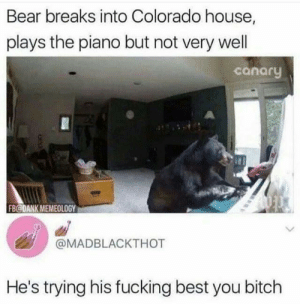 Bitch, Dank, and Fucking: Bear breaks into Colorado house,  plays the piano but not very well  canory  FB@DANK MEMEOLOGY  @MADBLACKTHOT  He's trying his fucking best you bitch