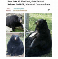 @hilarious.ted is my favorite animal memes page: Bear Eats All The Food, Gets Fat And  Refuses To Walk, Mate And Communicate.  ZOO John Springfield  NEWS COMMUNITY MEMBER @hilarious.ted is my favorite animal memes page