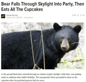 lolfunnow:  That's my kind of bear : Bear Falls Through Skylight Into Party, Then  Eats All The Cupcakes  George Dvorsky  Filed to: HOLY CRAP WTF  61,340 d 10 *  Today 6:40am  A 180-pound black bear crashed through an Alaska couple's skylight while they were getting  ready to celebrate their child's birthday. The unexpected visitor proceeded to feast on the  cupcakes after the panicked parents fled the room. lolfunnow:  That's my kind of bear