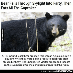 That's my kind of bearomg-humor.tumblr.com: Bear Falls Through Skylight Into Party, Then  Eats All The Cupcakes  A 180-pound black bear crashed through an Alaska couple's  skylight while they were getting ready to celebrate their  child's birthday. The unexpected visitor proceeded to feast  on the cupcakes after the panicked parents fled the room.  FUNNY STUFF ON MEMEPIX.COM  MEMEPIX.COM That's my kind of bearomg-humor.tumblr.com