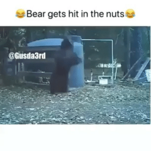 Memes, Phone, and Bear: Bear gets hit in the nuts  @Gusda3rd I feel this bears pain through the phone😂😯😯