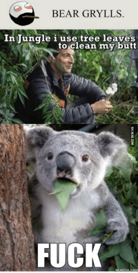 Bear Grylls: BEAR GRYLLS  In Tungle i use tree leaves  to clean my butt  FUCK  MEMEFUL COM