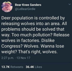 Deer, Too Much, and Bear: Bear Knee Sanders  @LeBearGirdle  Deer population is controlled by  releasing wolves into an area. All  problems should be solved that  way. Too much pollution? Release  wolves in factories. Dislike  Congress? Wolves. Wanna lose  weight? That's right, wolves.  2:27 p.m. 13 Nov 17  13.7K Retweets 36.4K Likes Wolf down that idea.