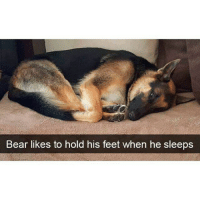 Funny, Memes, and Ted: Bear likes to hold his feet when he sleeps Follow me @hilarious.ted for more animal memes