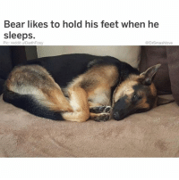 Bless Up, Crazy, and Dude: Bear likes to hold his feet when he  sleeps.  Pic: reddit u/DarthFoxy  @DrSmashlove DEAR STRANGERS THINGS YALL AINT HAVE TO KILL OFF THE CHUBBY, NERDY LOVABLE DUDE LIKE THAT, WE AIN'T EEN GET A CHANCE TO SEE OL BOY HIT WINONA WITH THAT NERDY DIH SO NOW SHE GON BE CRAZY FOR 17 MORE SEASONS YALL FOUL FOR THAT. PLUS HE WAS AN EARLY ADOPTER OF THE GIGANTIC VHS CAMERA YALL COULD HAVE MADE HIM FREAKY LIKE YALL COULD HAVE DIRECTED THE PLOT TO WHERE HE PIONEERED THE AMATEUR HOME VIDEO BEFORE ALL THESE WEIRDOS STARTED STRAPPING GO-PRO's TO THEY HEADPIECE LOOKING LIKE CYCLOPS AND ISHT. BACK WHEN U RESPECTABLY PLACED THE HOME VHS RECORDER ON THE NIGHT STAND AND JUST LET IT ROLL LOL. THAT WAS WELL BEFORE MY TIME I'M JUST SAYING IT WAS MORE RESPECTFUL BACK THEN LIKE MEN WOULD GET THEY MULLET ON POINT AND ROCK A SILK ROBE MAYBE LIGHT A CANDLE AND PLAY LIONEL RITCHIE NOW U JUST PULL A iPHONE OUT SWIPE LEFT AND HIT RECORD IT WAS A MORE CINEMATIC - ROMANTIC TIME BACK THEN BUT I DIGRESS. YALL COULD HIRE ME AS A WRITER LEMME UPGRADE YALL THE CRAZY INDIAN GIRL GOT POTENTIAL AS A SUPERHERO DUO WITH ELEVEN BUT I DON'T TRUST YALL TO DO IT RIGHT REACH OUT NOW WHILE MY PRICE IS CHEAP - ONCE I GET MY BOOK DEAL MY PRICE GON GO WAY UP AND INSTEAD OF WORKING FOR FREE TACOS AND ICE CREAM IMMA DIRECT YOU TO MY TEAM OF THREE AGGRESSIVE JEWISH FEMALE LAWYERS WITH SOUTHERN ACCENTS LIKE THEM TEXAN JEWISH LADIES WHO DON'T PLAY BRUV THEY ACT NICE AND SOUTHERN SWEET BUT THEN WHEN U PUT INK TO PAPER THEY GON TAKE HALF OFF THE TOP. I'M ON SALE - BLACK SUNDAY SALE - HOLLA AT ME - LEMME UPGRADE SEASON 3 BLESS UP 🤗😍😂😂😂