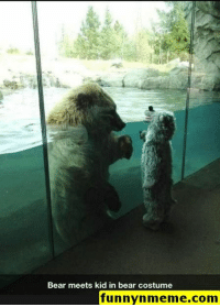 Funny, Gif, and Lol: Bear meets kid in bear costume  funnynmeme.com Funny Memes - #funnymemes #funnypictures #funnymeme #humor #funnytexts #funnyquotes #funnyanimals #funny #lol #haha #memes #entertainment #gifs #gif #funnygif #funnygifs