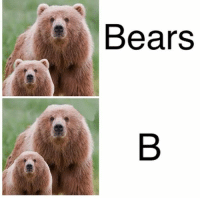 "Bears <p><a href=""http://memehumor.net/post/175012261698/only-bear-nibbas-can-upvote"" class=""tumblr_blog"">memehumor</a>:</p>  <blockquote><p>Only bear nibbas can upvote</p></blockquote>"