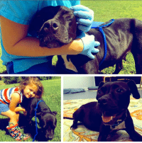 "Alive, Animals, and Bad: BEAUFORT, SC....4 y/o Pittie Abandoned with LYMPHOMA needs Medical Care and LOVE.   Please, Help Us, Help Her by DONATING.  http://www.noahs-arks.net/animal/view/skittles-2#.WdU-jUyZO8U  BEAUFORT, SC......We do our best to help out Beaufort and Jasper County with their Medical Abuse cases when no one else will step up.   Every once in a while, we get a call from the Director when they have a Pitbull that is in line to be put to sleep, but everyone is too attached and distraught to do it.   Beaufort County is packed with healthy dogs that need a home.   A sick Pitbull is not going to last very long.   I listened to the Director's plea for this beautiful pocket pitty that was approximately four years old.   She came in as a stray and seemed to be fine when she first arrived.  Within days, she was lethargic and could barely stand.  She was sent to the Vet where it was determined she had Lymphoma.   She was sent back to Beaufort County and before long her time was up.  They knew she would be put down, so they did not even give her a name.   I looked over the pathology report, sent it to our two Oncologists and decided I would rather have this sweet pup spend her final days with us at Noah's Arks Rescue until her time came than to die this way.    I did want her to be seen by our Oncologist before I decided nothing could be done.   Beaufort County made arrangments to get her to Dr. Claudia McFadden at Carolina Veterinary Specialists in Matthews, NC the next day.   The first thing we did, was to name her.   She was such a cheerful little girl that we named her Skittles.   This adorable pup loves everyone and every animal she meets.   She is one of the happiest dogs that could care less that she is sick.   As the saying goes, ""One Man's trash is another Man's Treasure.""   She is our very special Treasure.   We have each fallen in love with this tiny black Beauty.    Dr. McFadden did her battery of tests and also had Cardiology do their work-up since she is Heartworm positive.    Dr. McFadden felt there was a lot of Life left in this little Angel, so we opted to give her the best chance possible and started doing rounds of Chemotherapy.   Skittles was treated at Carolina Vet. Specialists initially but is now being treated by Dr. Kerry Rissetto at Charleston Veterinary Referral Center, so she is closer to us.     We have started a slow-kill Heartworm Treatment since she cannot have anything that would compromise her immune system.  Dogs with Lymphoma are very sensitive to any chemical in their body.  We opted for the best Chemotherapy that would give her the best quality of Life.   We have treated several dogs with Lymphoma, and they are still alive and thriving.   Lymphomas are scary to a lot of Dog Owners.   Enlarged Lymph Nodes is the first sign something is not right with the dog.   Dogs do not show signs of feeling bad until they have at it for a while.   I don't know any other Rescue that treats as many dogs as we do with Cancer.   We jump through hoops for these incredible, beautiful Pups.   If the animal has a good Quality of Life on the Treatment, then we proceed with the recommended Protocol.   So far, dear Skittles is tolerating her Chemotherapy without any adverse reactions.  The main reaction we see is their white blood count will drop significantly.   They can usually bounce back quickly, but in some circumstances, they will need a blood transfusion.   So far, Skittles is doing amazingly well.   We are hopeful our little bundle of Joy will have several good years with us.  She could only be placed in a home that understands her diagnosis and knows she will not live out her natural Lifespan.  In the meantime, she will be spoiled rotten with us at the Rehab facility.   Any animal that is in our Hospice Program is Adopted by US.   We are their Family until their time comes.   Instead of having one or two people spoiling them, they have lots that cater to their every need.     We are the lucky recipients of their unconditional Love.    Being in our Hospice Program never means we EVER give up.  It means we do everything possible until their Quality of Life is not there.  Life is Good when you are part of our incredible Noah's Arks Rescue Family.  We wish we could take all of the animals that need our help, but that is just not possible.    The ones we do take in, know unconditional LOVE from the very moment we say YES.   Skittles diagnostics and chemotherapy is already around $5000. That will continue as long as she is tolerating her protocol and her bloodwork remains stable.  Please, Donate toward her Medical Bills.  Thanks for caring and making their Journey to Heal and find Love, possible.  We greatly appreciate your unconditional Love and Support."