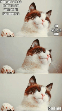 Beautiful, Cats, and Memes: beautiful and  wonderful  admire vou  OH  STOP IT  YOU  CONTINUE Cats in a nutshell