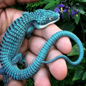 Beautiful baby lizard (via): Beautiful baby lizard (via)