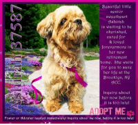 Animals, Beautiful, and Desperate: Beautiful little  senion  sweetheart  Ashirah  is waiting to be  cherished,  cared for  & loved  forevermore in  her new  retirement  home. She waits  for you to save  her life at the  Brooklyn, Ny  ACC  In  Inquire about  her now before  it is too late!  ADOPT ME  foster or ldopter needgd immediatelg! Inquire about me now, before it is too latel **Adopter or Foster needed ASAP**  Beautiful little senior sweetheart Ashirah is waiting to be cherished, cared for & loved forevermore in her new retirement home. She waits for you to save her life at the Brooklyn, NY ACC. Inquire about her now before it is too late!  ✔Pledge✔Tag✔Share✔Foster✔Adopt✔Save her life!  ****************************************** To FOSTER or ADOPT,  SPEAK UP NOW & Save a Life: Direct Adopt from the ACC  Or Apply with rescues  Or Message Must Love Dogs - Saving NYC Dogs for assistance!!! ****************************************** The general rule is to foster you have to be within 4 hours of the NYC ACC approved New Hope partner rescues you are applying with and to adopt you will have to be in the general NE US area; NY, NJ, CT, PA, DC, MD, DE, NH, RI, MA, VT & ME (some rescues will transport to VA).  =================================  Ashirah 37587 Small Mixed Breed Sex female Age 10-12 yrs (approx.) Weight 9 lbs My health has been checked.  My vaccinations are up to date. My worming is up to date.  I have been micro-chipped.  I am waiting for you at the Brooklyn, NY ACC. Please, Please, Please, save me! ... NOTE: *** WE HAVE NO OTHER INFORMATION THAN WHAT IS LISTED WITH THIS FLYER *** ... – please email Adopt@NYCACC.org for additional info - SUBJECT Line: Enter animal ID number and the shelter location - Don't forget to add your email address and phone numbers where they can reach you to your email as well. ...  RE: ACC site Just because a dog is not on the ACC site does not mean they are safe by any means. There are many reasons for this like a hold or an eva