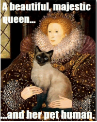 Memes, 🤖, and Planet: beautiful majestic  Queen...  Rand her pet human. Yep. Via CAT Planet