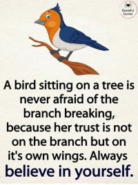 bird: Beautiful  Quotes  A bird sitting on a tree is  never afraid of the  branch breaking,  because her trust is not  on the branch but on  it's own wings. Always  believe in yourself