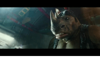 Bebop & Rocksteady: Teenage Mutant Ninja Turtles (TMNT): Bebop & Rocksteady: Teenage Mutant Ninja Turtles (TMNT)