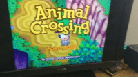 Animal, Ram, and Disc: Because Animal Crossing's file size was 32MB, the discs contents were able to be stored in the GameCube's RAM, and you only need the disc to save or load https://t.co/oa8JXDMme6