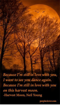 Dancing, Love, and Memes: Because I'm still in love with you,  I want to see you dance again.  Because I'm still in love with you  on this harvest moon.  -Harvest Moon, Neil Young  purpleclover.  com