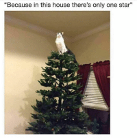"""House, Star, and Only One: """"Because in this house there's only one star"""""""