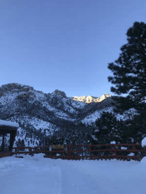 Because it was a snow day today I went to Mt. Charleston and got this pic at a restaurant up there.: Because it was a snow day today I went to Mt. Charleston and got this pic at a restaurant up there.