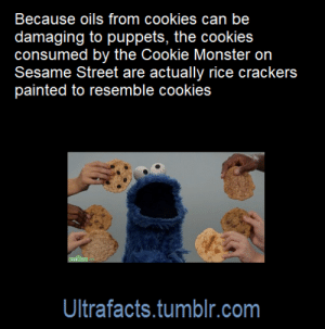 ultrafacts:  Source: [x]Follow @ultrafacts for more facts!: Because oils from cookies can be  damaging to puppets, the cookies  consumed by the Cookie Monster on  Sesame Street are actually rice crackers  painted to resemble cookies  Ultrafacts.tumblr.com ultrafacts:  Source: [x]Follow @ultrafacts for more facts!