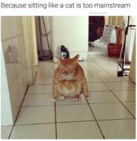 Grumpy Cat, Cat, and Mainstream: Because sitting like a cat is too mainstream  hilarious ted