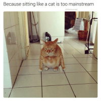 Funny, Mainstream, and Too-Mainstream: Because sitting like a cat is too mainstream  ohilarious.ted I think it's planning something (@hilarious.ted)
