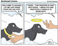 Dogs, Halo, and Heaven: Beckhead Comics  By Paul Beckman  WELCOME TO HEAVEN.  LET ME JUST RAISE  YOUR COLLAR A BIT...  THERE... THIS PROCESS IS EASY  WITH DOGS... I MEAN YOU ARE  PRACTICALLY ANGELS TO  BEGIN WITH  CBeckhead Comics Raise the Halo Collar <3