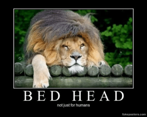 very-demotivational:  Bed Head - Demotivational Poster: BED HEAD  not just for humans  fakeposters.com very-demotivational:  Bed Head - Demotivational Poster
