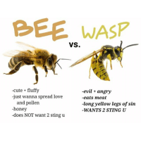 Bees are the cutest insects ever. 😄🐝💕: BEE WASP  VS.  -cute fluffy  -evil angry  -just wanna spread love  -eats meat  and pollen  -long yellow legs of sin  -honey  WANTS 2 STING U  -does NOT want 2 sting u Bees are the cutest insects ever. 😄🐝💕