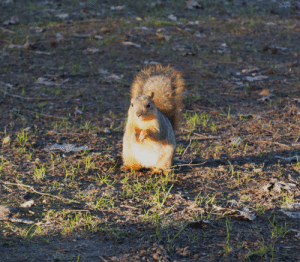 Been feeding this squirrel everyday and now he/she comes to me instantly: Been feeding this squirrel everyday and now he/she comes to me instantly