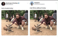 "<p>Koala and Shia at the zoo via /r/memes <a href=""https://ift.tt/2Ktlkxh"">https://ift.tt/2Ktlkxh</a></p>: Beerbongs & Bentleys  @PostMalone  Kangaroo  @YourFavKangaroo  met a koala today  met Shia LaBeouf today <p>Koala and Shia at the zoo via /r/memes <a href=""https://ift.tt/2Ktlkxh"">https://ift.tt/2Ktlkxh</a></p>"