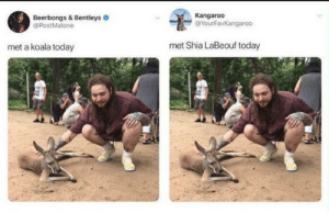 Koala and Shia at the zoo by a-cat-named-OJ FOLLOW HERE 4 MORE MEMES.: Beerbongs & Bentleys  @PostMalone  Kangaroo  @YourFavKangaroo  met a koala today  met Shia LaBeouf today Koala and Shia at the zoo by a-cat-named-OJ FOLLOW HERE 4 MORE MEMES.