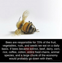 Beef, Beef, and Memes: Bees are responsible for 70% of the fruit,  vegetables, nuts, and seeds we eat on a daily  basis. If bees became extinct, beef, dairy, Corn,  rice, coffee, cotton, entire food chains, animal  species, and a large chunk of the economy  would probably go down with them  fb.com/factsweird
