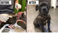 Memes, 🤖, and Crystal: BEFORE  AFTER She was found nearly decapitated. When we found out who did this to her, we were crying... Now look at her! This is the power behind a Hendrick & Co. tee! With every purchase you help save animals just like Crystal!   Read & share Crystal's story here: http://dogco.org/save-crystal