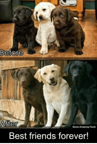 best friends forever: Before  After  Some Amazing Facts  Best friends forever!