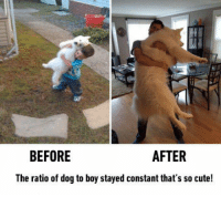 "Cute, Meme, and Tumblr: BEFORE  AFTER  The ratio of dog to boy stayed constant that's so cute! <p>This Is So Adorable .<br/><a href=""http://daily-meme.tumblr.com""><span style=""color: #0000cd;""><a href=""http://daily-meme.tumblr.com/"">http://daily-meme.tumblr.com/</a></span></a></p>"