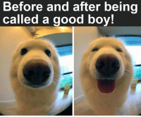 Memes, 🤖, and Good Boy: Before and after being  called a good boy!