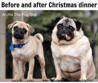 Memes, Pugs, and 🤖: Before and after Christmas dinner  Archie The Pug Star  we Who enjoyed their Christmas dinner a little to much? 😂😂😂