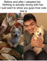 "Cute, Http, and Wholesome: Before and after I adopted her.  Nothing is actually wrong with her,  I just want to show you guys how cute  she is <p>Wholesome One-Eyed Pom 😜 via /r/wholesomememes <a href=""http://ift.tt/2o1PcCv"">http://ift.tt/2o1PcCv</a></p>"