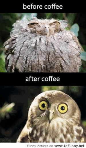 DECAF OWL MEMES: before coffee  after coffee  www.LeFunny.net  Funny Pictures on DECAF OWL MEMES