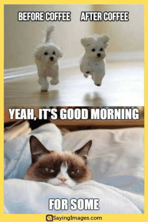 80 Good Morning Memes To Kickstart Your Day #goodmorningmemes #morningmemes #memes #funnymemes #humor #sayingimages: BEFORE COFFEE  AFTER COFFEE  YEAH, ITS GOOD MORNING  FOR SOME  SayingImages.com 80 Good Morning Memes To Kickstart Your Day #goodmorningmemes #morningmemes #memes #funnymemes #humor #sayingimages