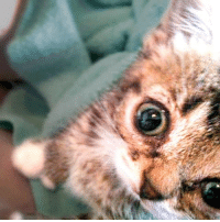 Memes, Baby, and 🤖: Before she was Lil BUB, she was a BABY BUB.