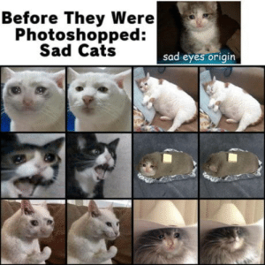 laughoutloud-club:  Crying cat origins: Before They Were  Photoshopped:  Sad Cats  sad eyes origin laughoutloud-club:  Crying cat origins