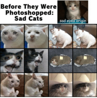 Cats, Twitter, and Sad: Before They Were  Photoshopped:  Sad Cats  sad eyes origin The Truth! (by.: bepsis__boy on twitter)