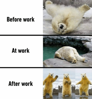 Dank, Work, and Tomorrow: Before work  At work  After work Me tomorrow